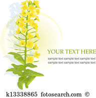 Rape flower Clipart and Illustration. 25 rape flower clip art.