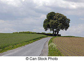Stock Photos of Farm in May with rape field, German.