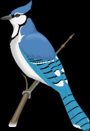 Rare bird clipart.