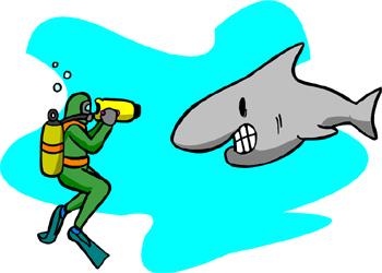 Shark Attacks Are Rare.