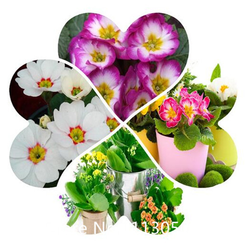 Compare Prices on Rare Flowers.