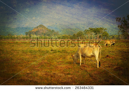 Picture of cow and bull free stock photos download (394 Free stock.