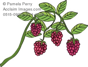 Clip Art Illustration of Raspberries Growing on a Vine.