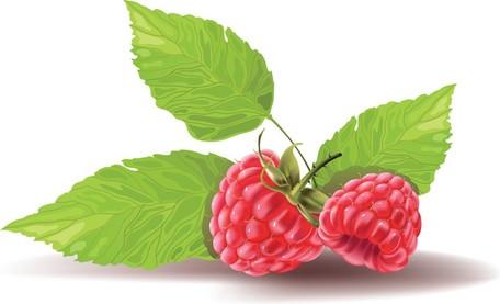 Raspberry Clip Art, Vector Raspberry.