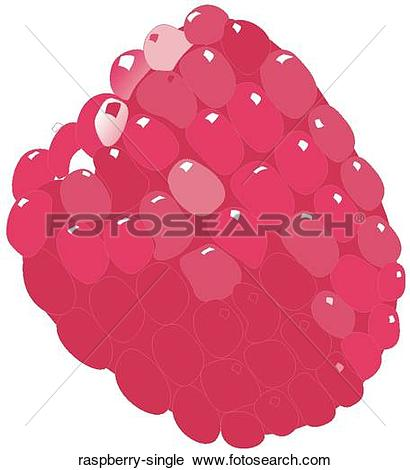 Raspberry Illustrations and Clipart. 1,138 raspberry royalty free.