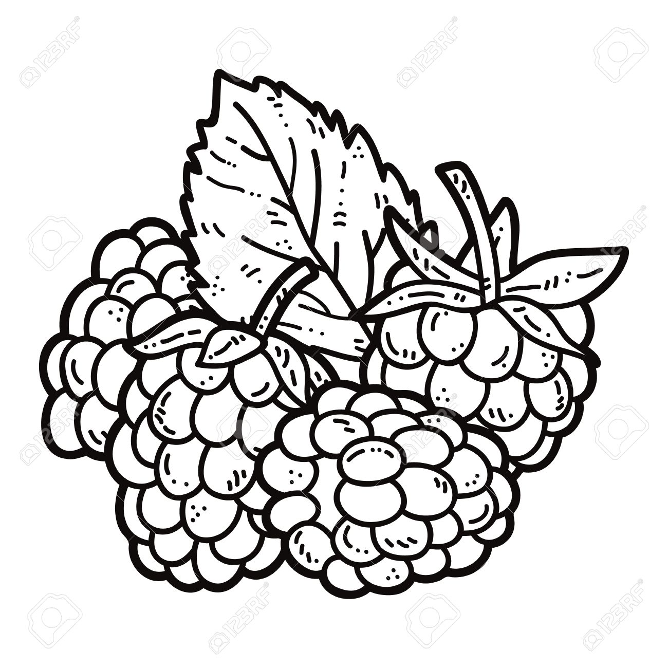 The best free Raspberry drawing images. Download from 114.