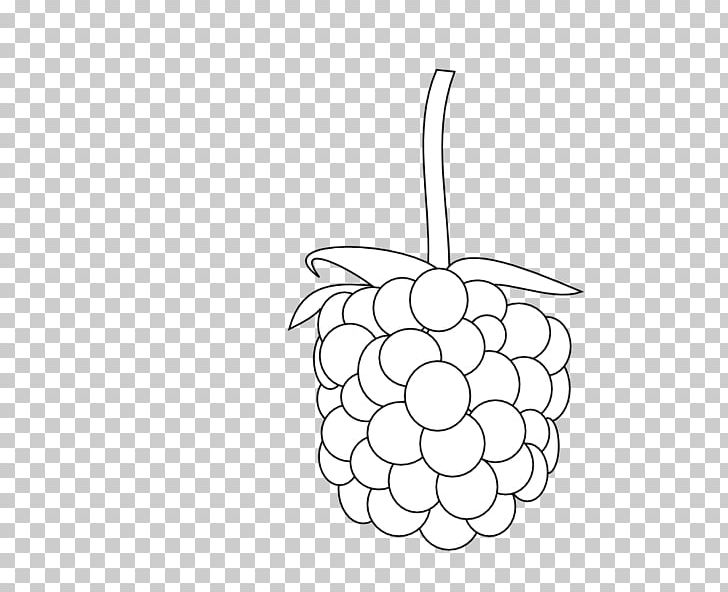 Black Raspberry Fruit Blackberry PNG, Clipart, Artwork.
