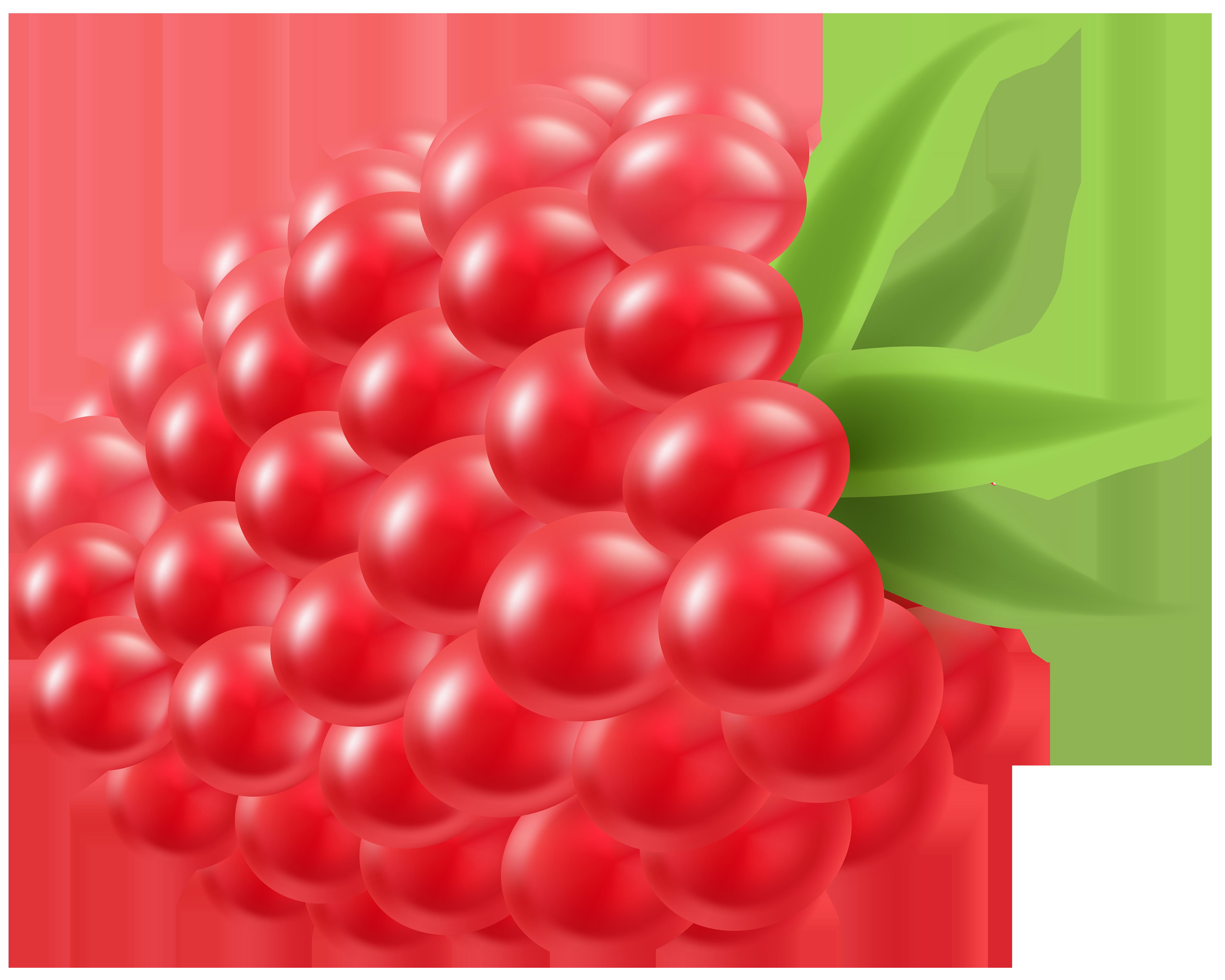 Raspberry PNG Clip Art Image.