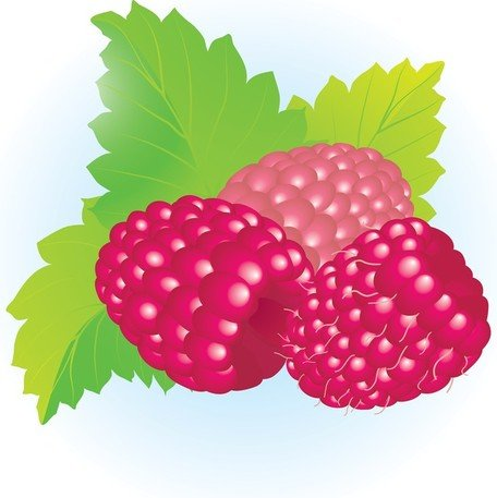 Free Free Raspberriess Clipart and Vector Graphics.