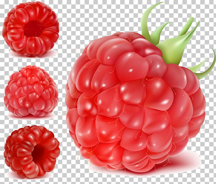 Frutti di bosco Raspberry Fruit Euclidean , Raspberry PNG.