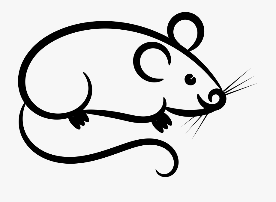 Rat Mouse Clipart White.
