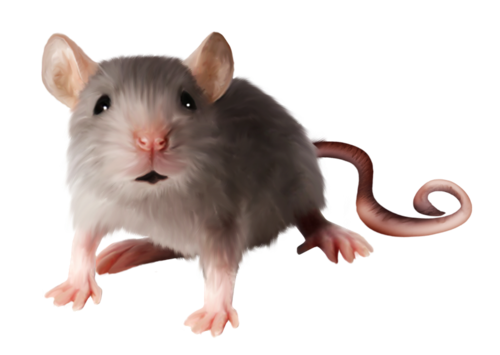 Download Free png mouse, rat PNG image, Download PNG image.