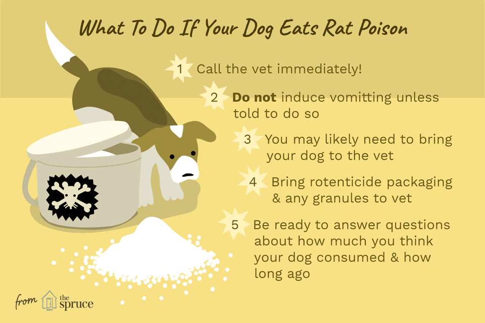 How to Treat Rat Poisoning in Dogs.
