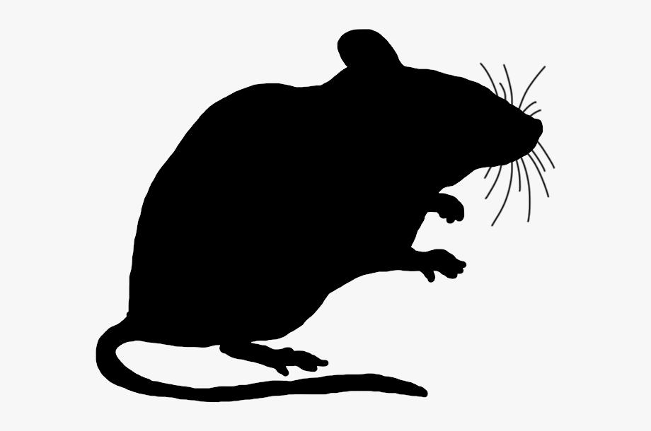 Rat Clipart Transparent.
