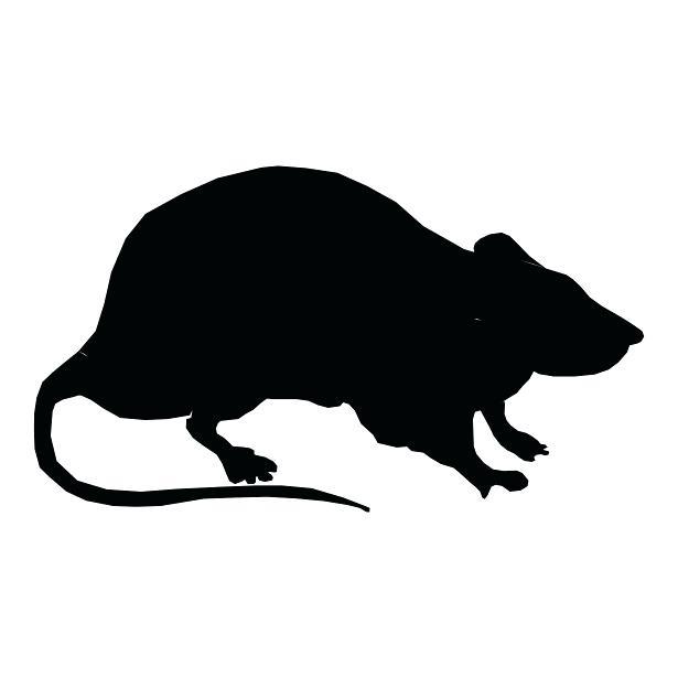 Rat Silhouette Png Stock Public Domain Pictures.