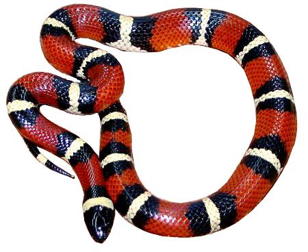 Snakes Clip Art Download.