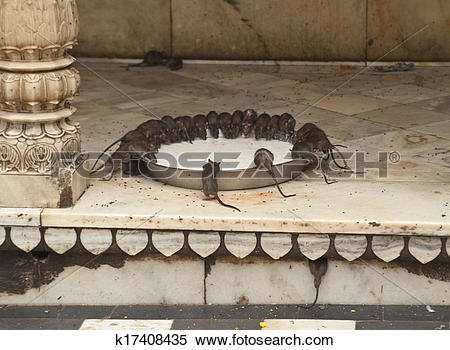 Stock Image of Rat Temple k17408435.