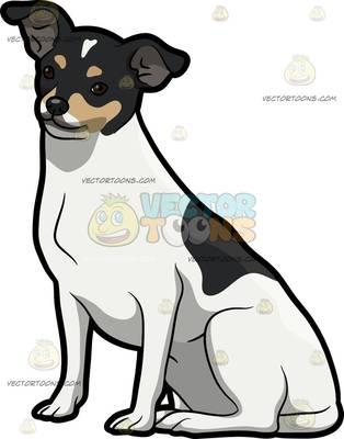 rat terrier Cartoon Clipart.