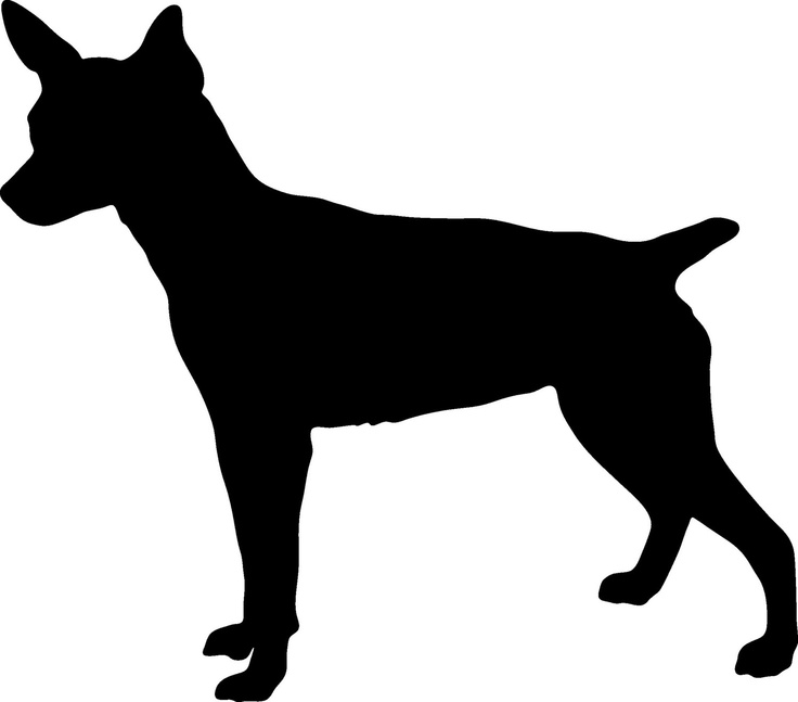 1000+ images about (Rat terrier lover) on Pinterest.