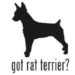 1000+ images about Rat Terrier <3 on Pinterest.