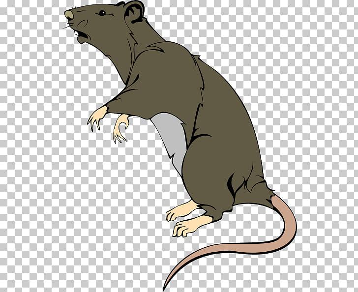 Rata marrón rata de laboratorio roedor rata, ácido PNG.