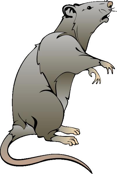 Cartoon Rat Drawings.