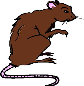 Ratten clipart 4 » Clipart Station.