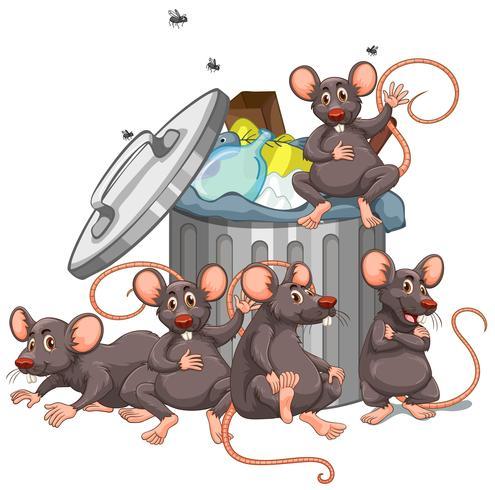 Fünf Ratten, die am Mülleimer sitzen.