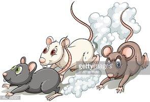 Drei Ratten stock.