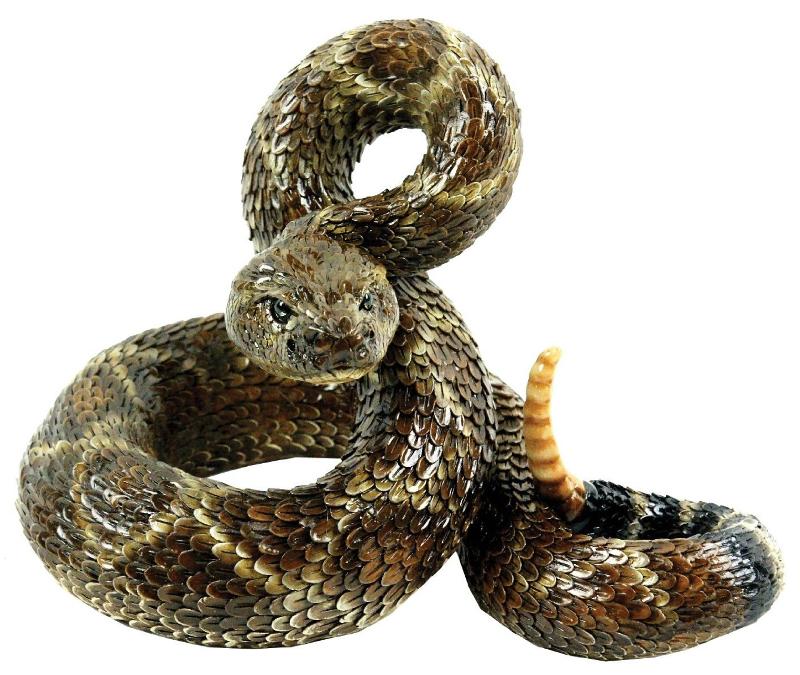 Rattlesnake PNG Transparent Rattlesnake.PNG Images..