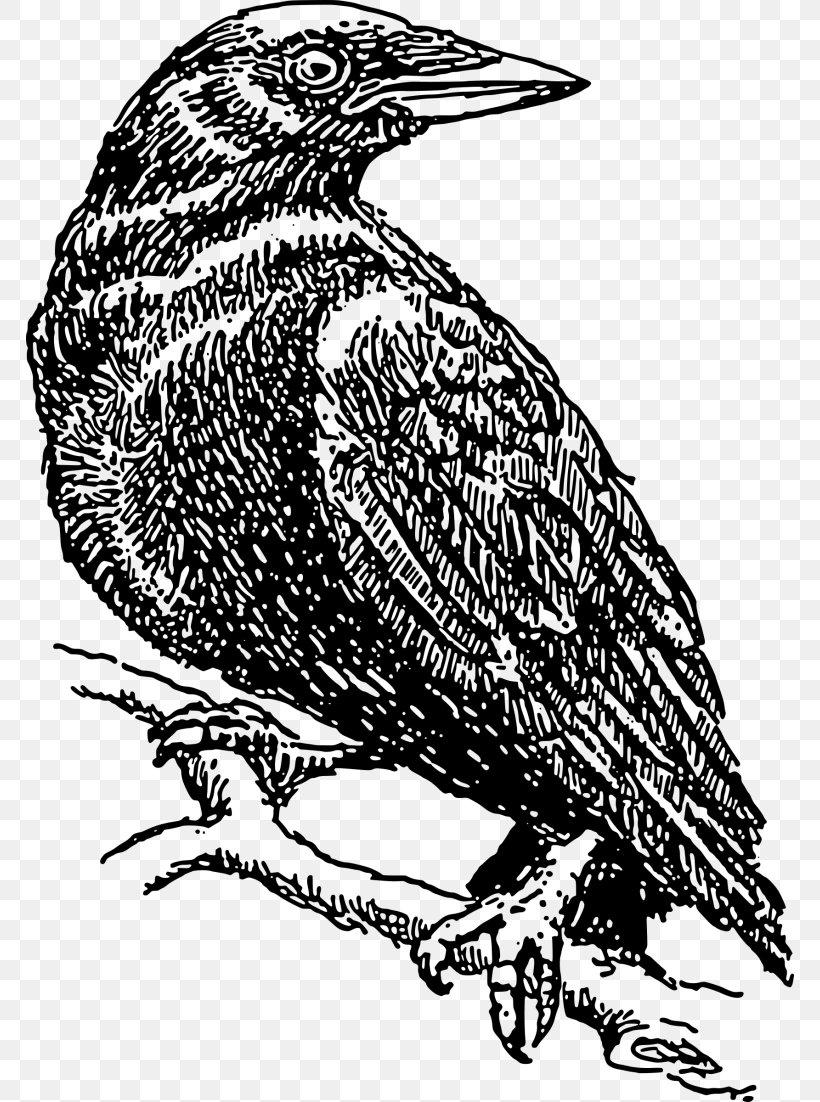 Common Raven Crow Clip Art, PNG, 768x1102px, Common Raven.