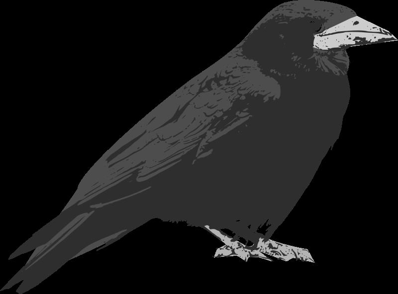Free Clipart: Raven.