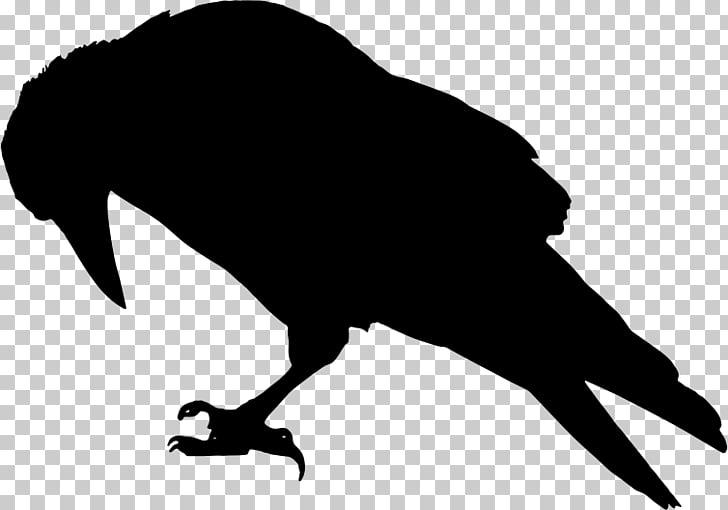 Rook Common raven Bird Crow , raven PNG clipart.