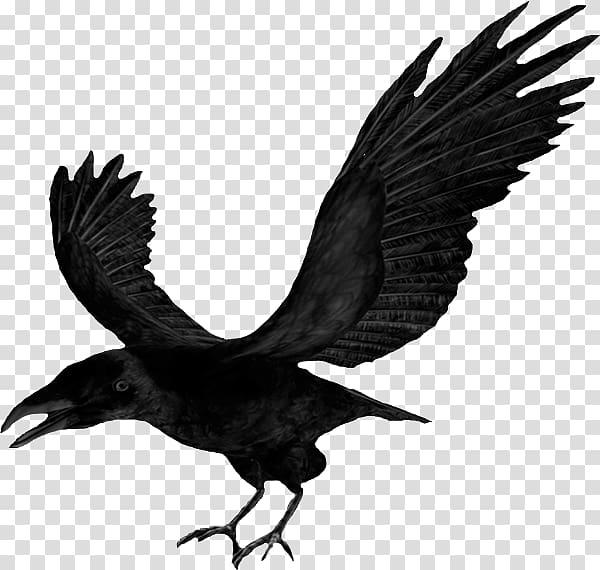 Flying raven transparent background PNG clipart.