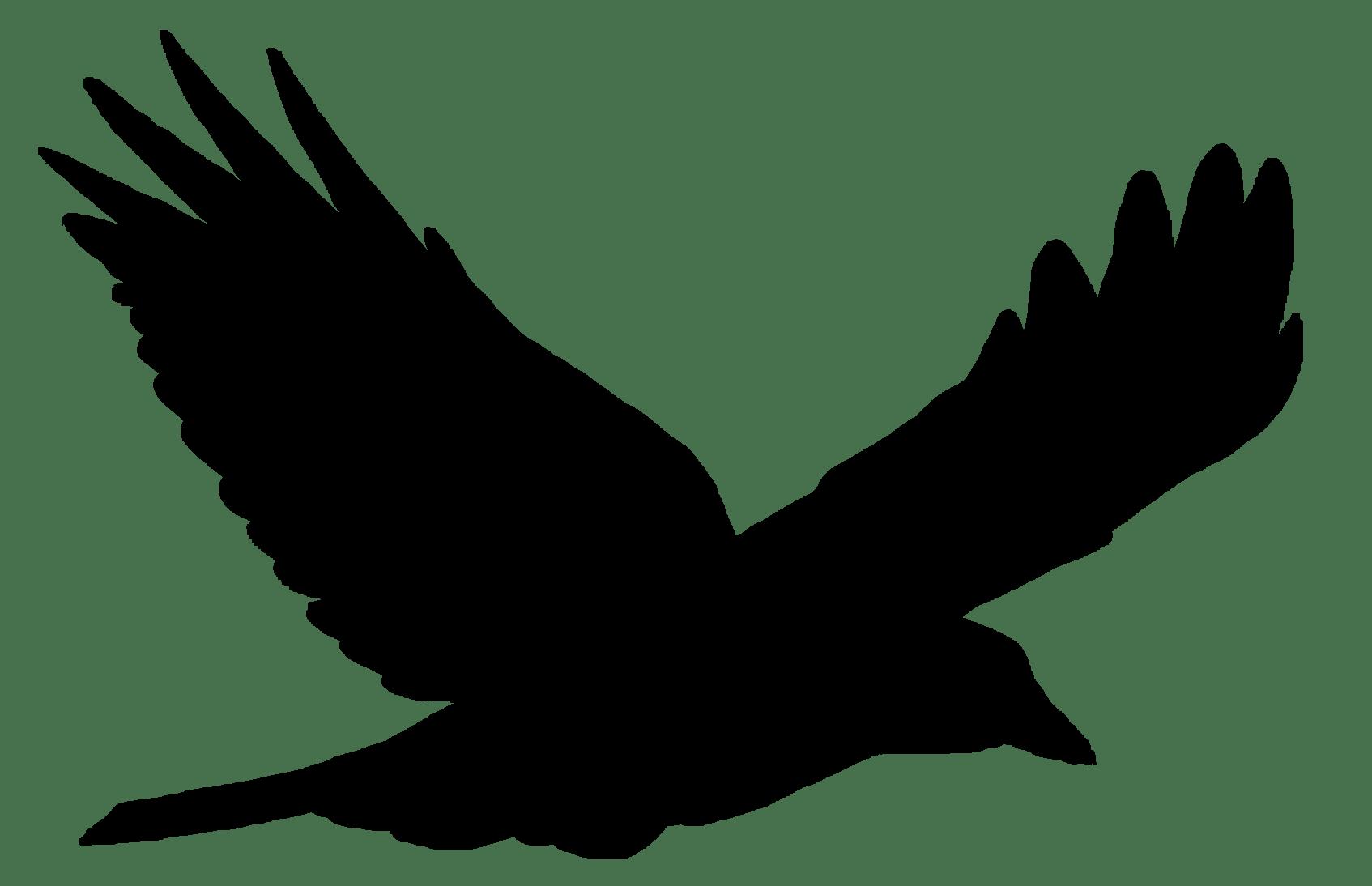Bird flight Bird flight Common raven Clip art.