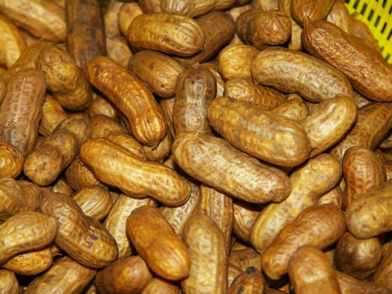 Boiled peanuts clipart.