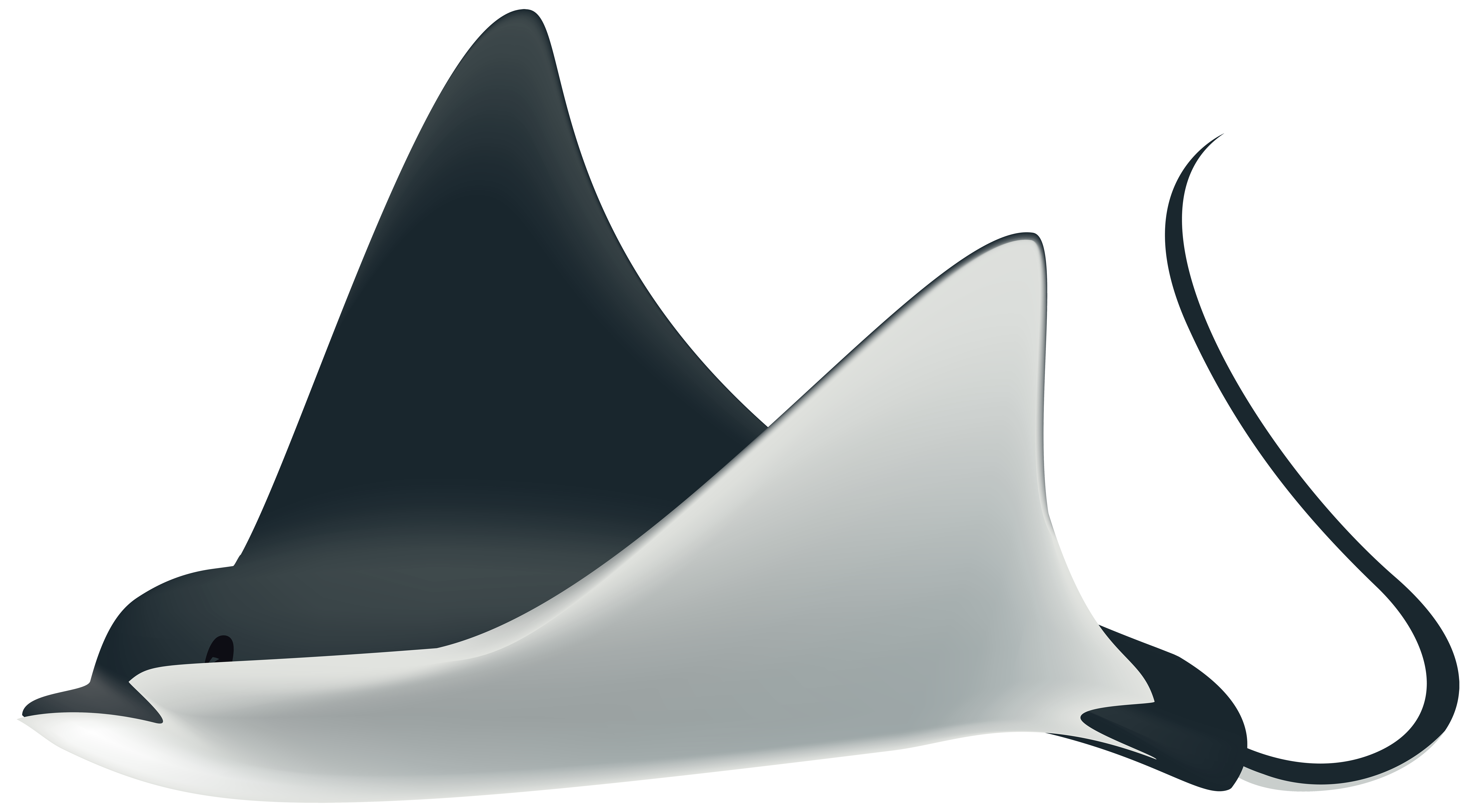 Ray Fish PNG Transparent Clip Art Image.