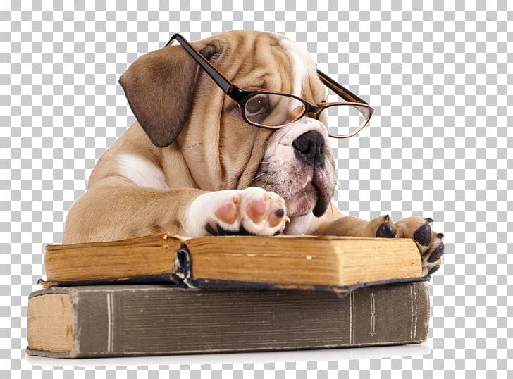 French Bulldog The Battle of the Books Reading, dog, dog.