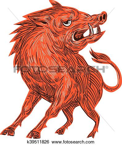 Clip Art of Angry Razorback Ready To Attack Drawing k39511826.