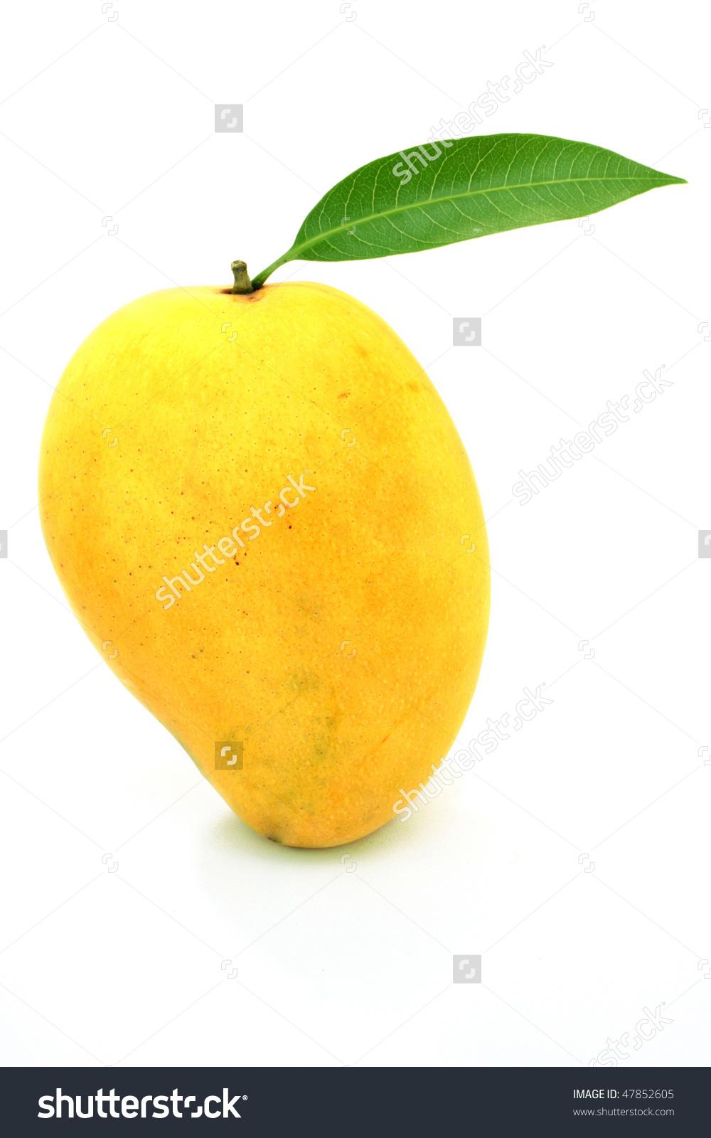 Ripe Mango Clipart.