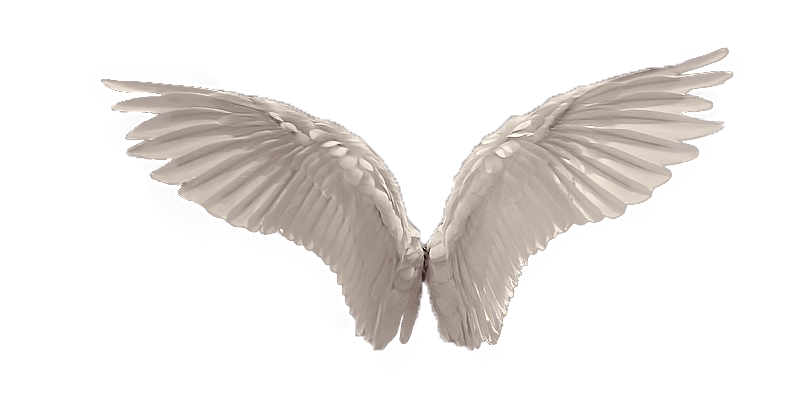 Wings favourites by ElfaBlu on DeviantArt.