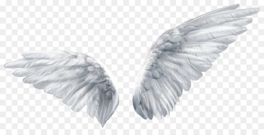 Angel Wing Png & Free Angel Wing.png Transparent Images.