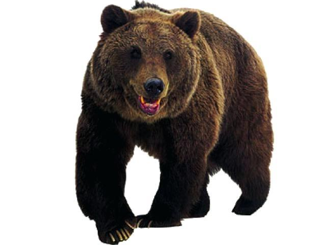 Bear clipart realistic for free download and use images in.