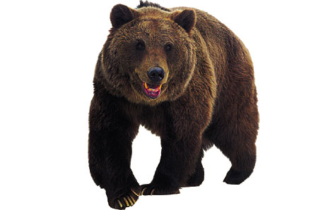 Free Bear Clipart Images.