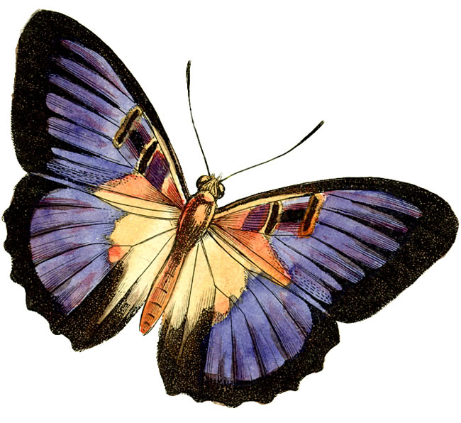 Free Real Butterfly Cliparts, Download Free Clip Art, Free.