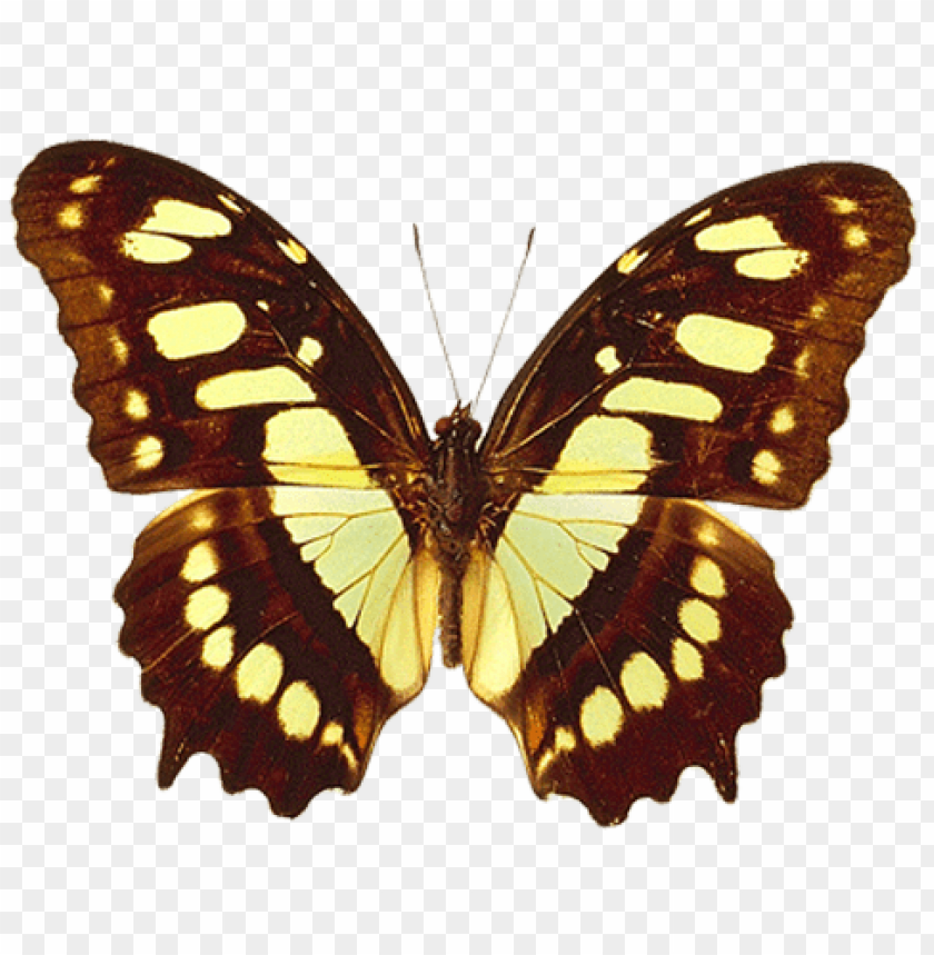 Download brown and yellow real butterfly clipart png photo.