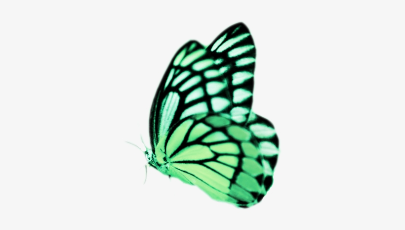 Real Butterflies Png Real Butterfly Png Real Butterfly.