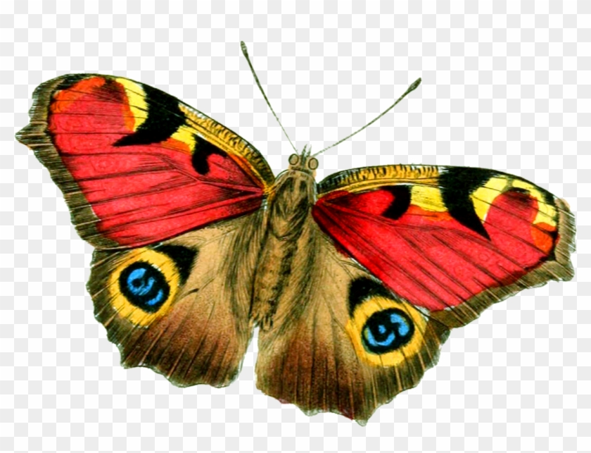 Butterfly Png Big Size.