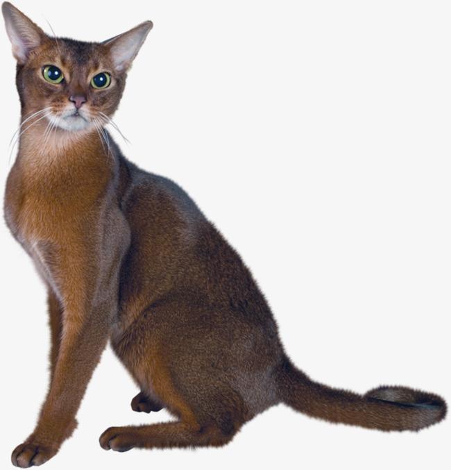 Download Free png A Persian Cat, Cat Clipart, Real, Cat PNG.