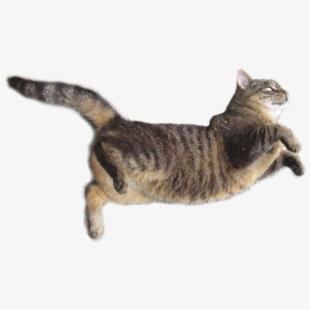Real Cat Transparent , Transparent Cartoon, Free Cliparts.